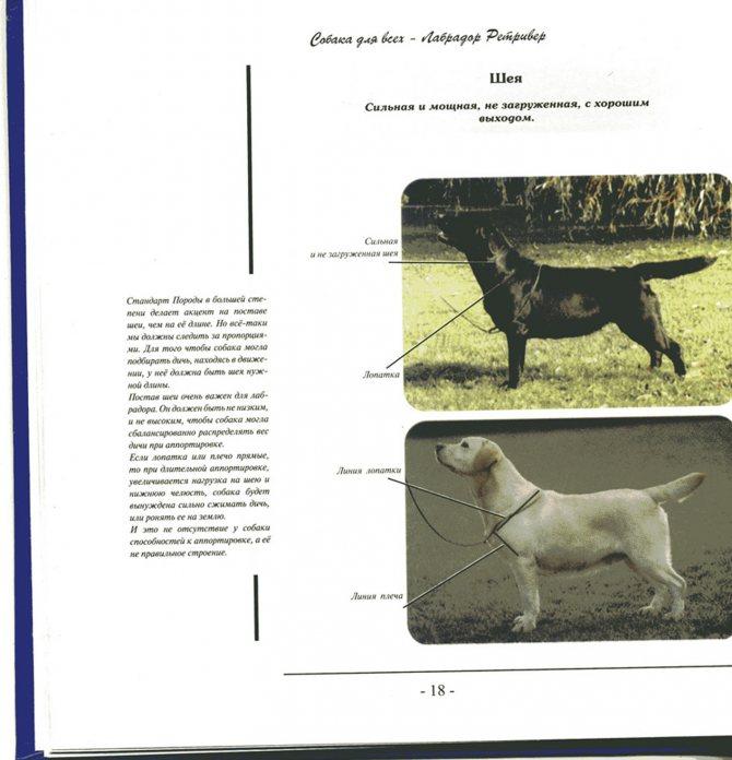Той-терьер собака. описание, особенности, цена, уход и содержание той-терьера | живность.ру