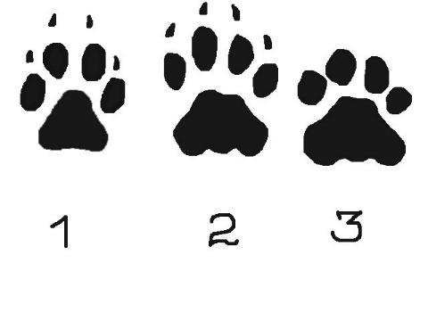 Следы животных: картинки с подписями для детей: зайца, медведя и другие рисунки