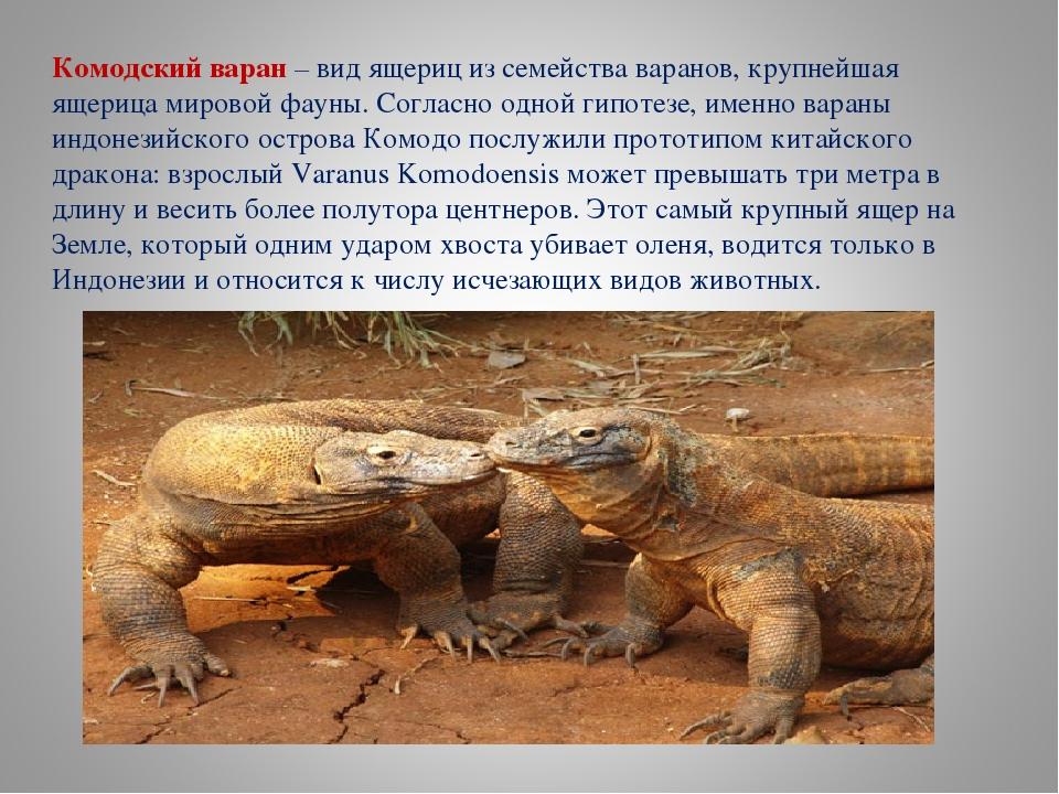 Варан - фото животное, виды, особенности