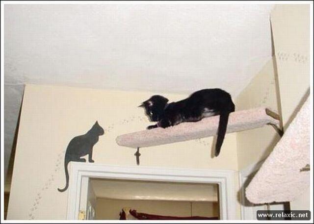 Кошки, кошка на даче, необходимые меры безопасности