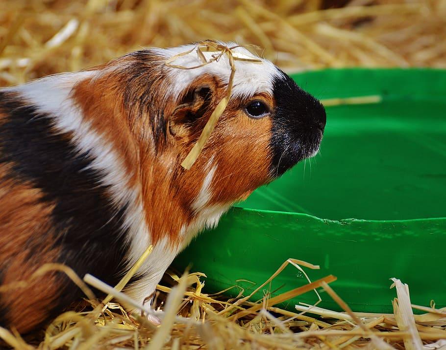 Полезно или вредно? можно ли давать кроликам и другим домашним животным топинамбур?