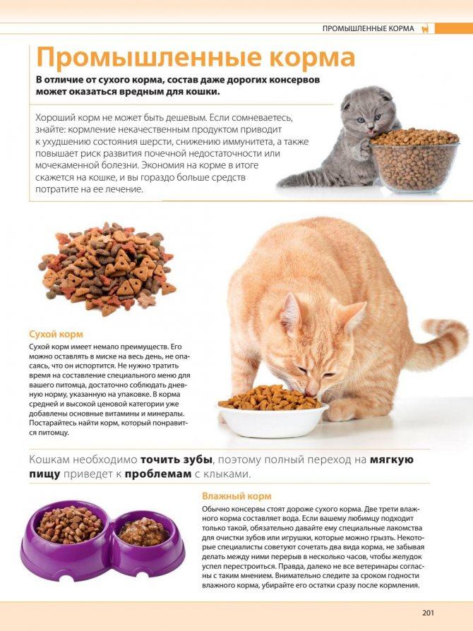 Кошку рвёт после сухого корма: причины и решение проблемы