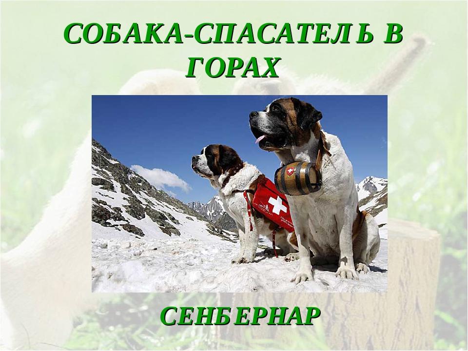 Собаки спасатели мчс: в горах, на воде и их породы