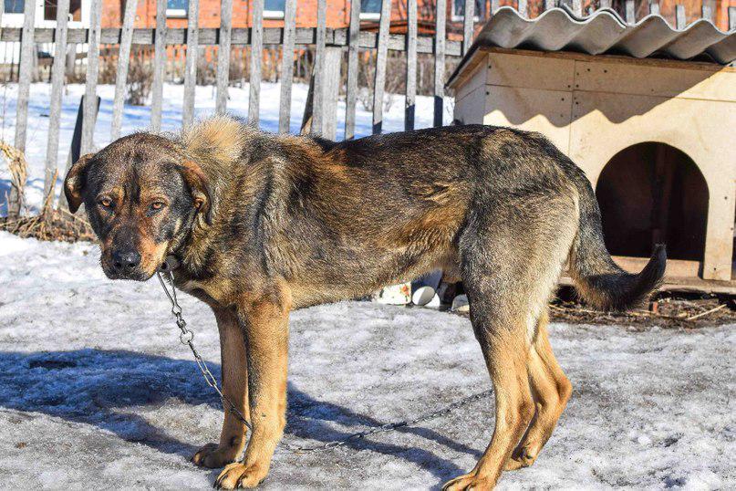 Топ-30 лучших пород собак для охраны