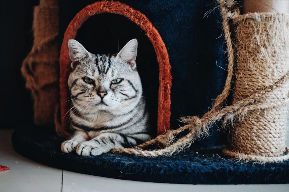 Как кошки проявляют любовь к хозяину и почему приносят мышей | hill's pet