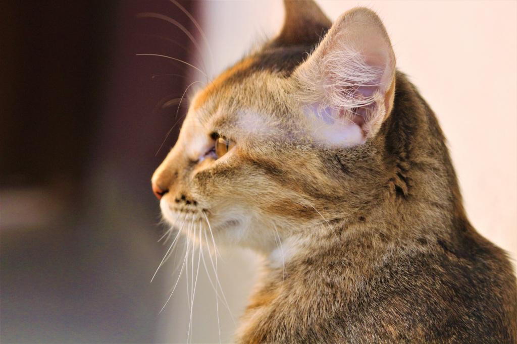 Кошка или кот гадит: как отучить кошку гадить в неположенном месте?   нвп «астрафарм»