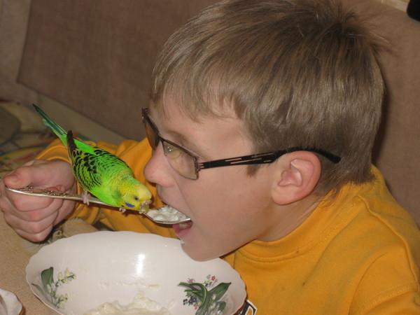 Как быстро приручить к рукам волнистого попугая: рабочие методы