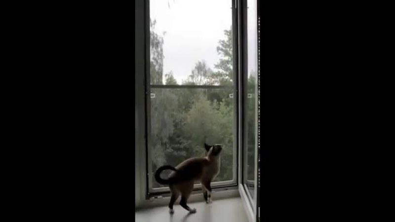 Народные приметы про кошек и котов