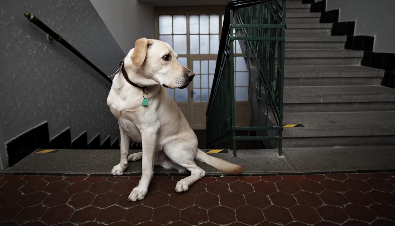 10 пород собак, которые отличаются особой преданностью - zefirka