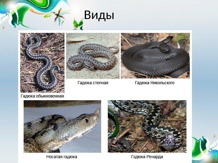 Змеи кавказа: ядовитые и неядовитые
