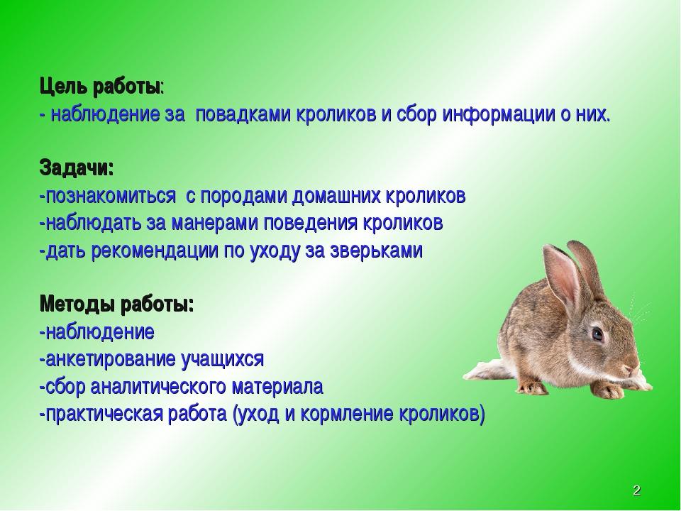 Карликовые кролики: технология разведения, уход. трудности при содержании и разведении карликовых кроликов - автор екатерина данилова - журнал женское мнение