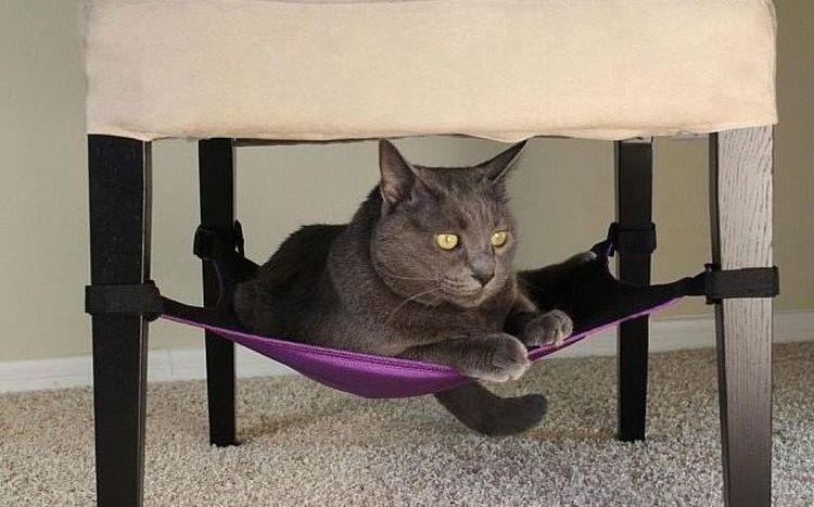 Как мыть кошку в домашних условиях - подробная инструкция и мой личный опыт