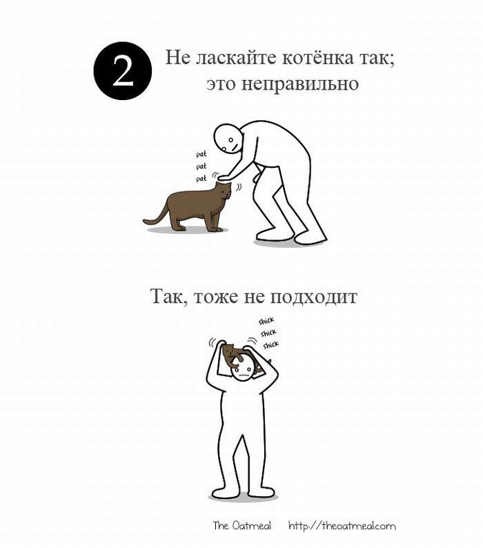 Как правильно гладить кота? - placeclean