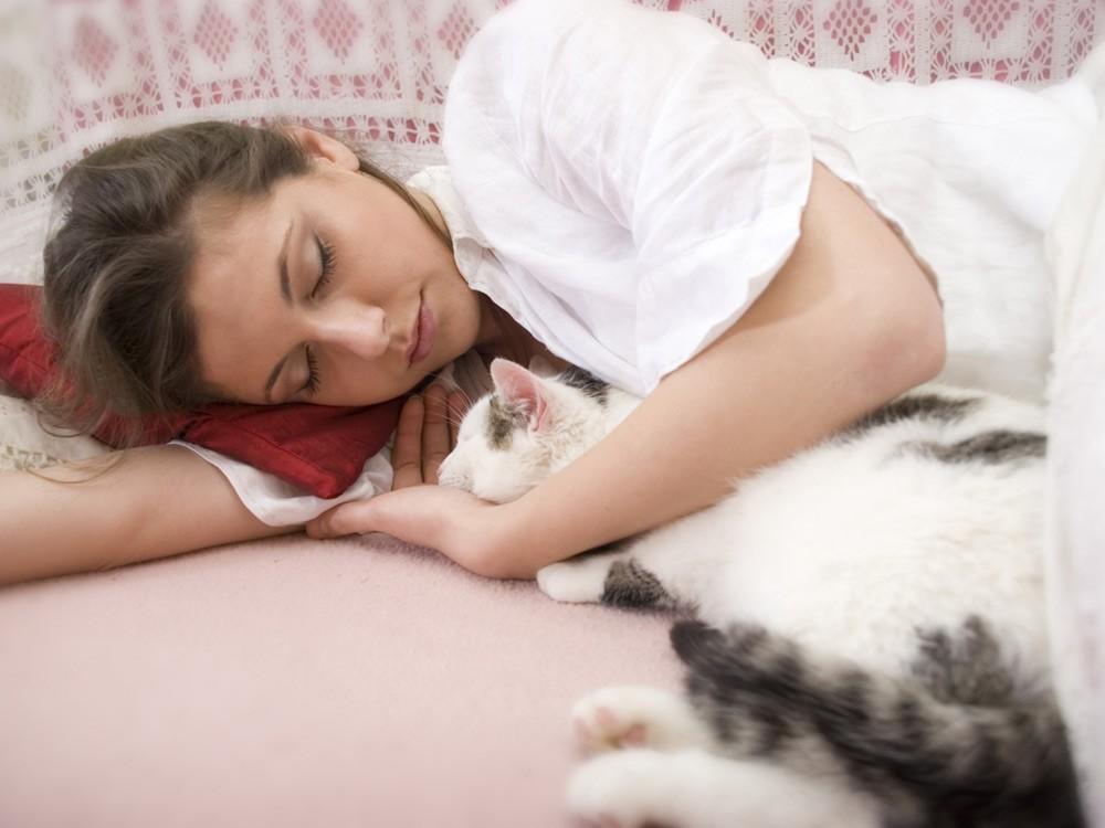 Почему кошки ложатся спать вместе с хозяевами