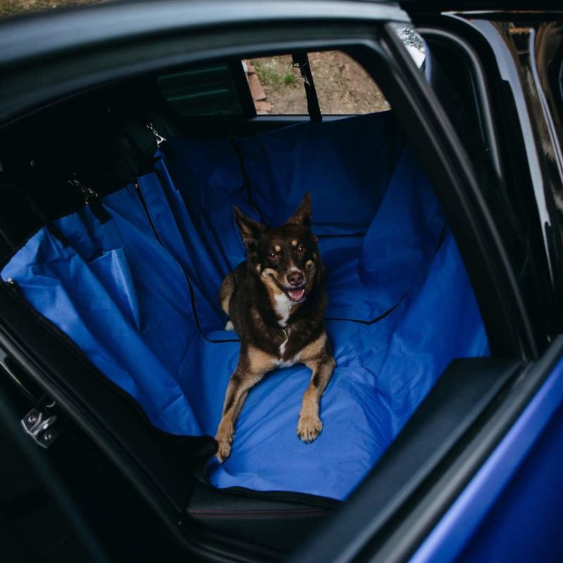Автогамак или как перевозить собаку в машине?
