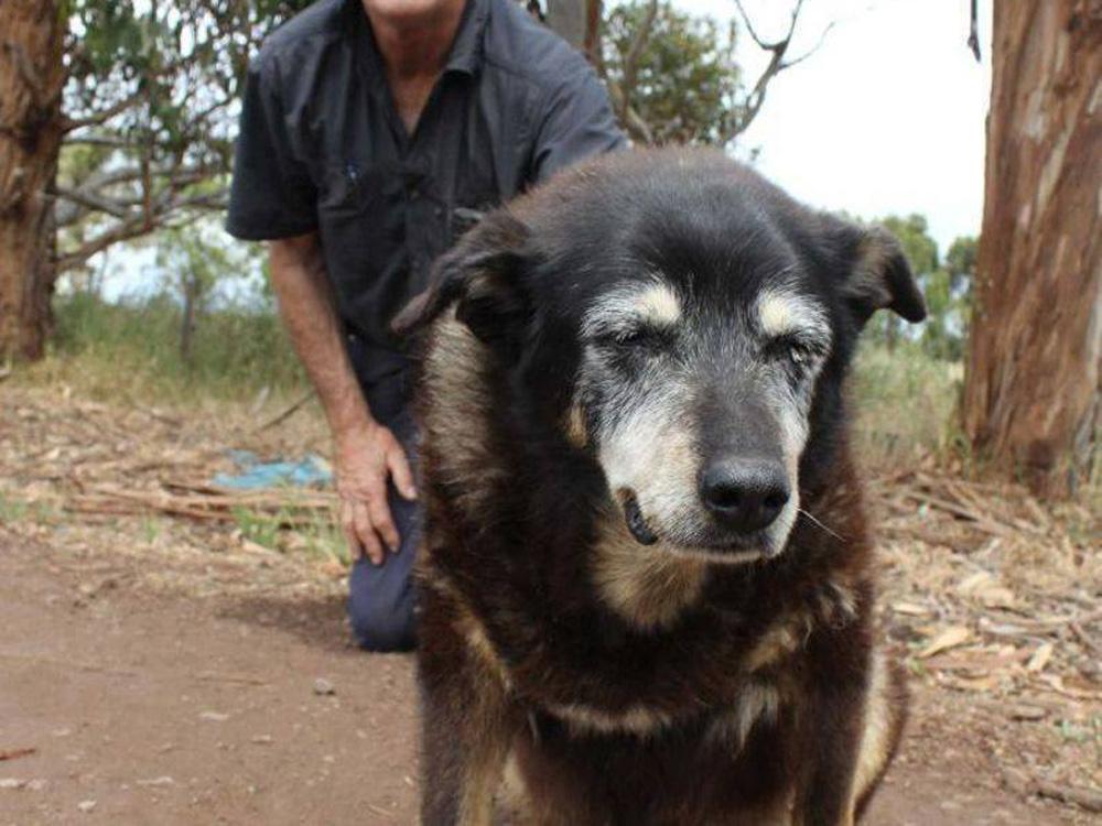 Собаки-долгожители: факты из книги рекордов гиннеса