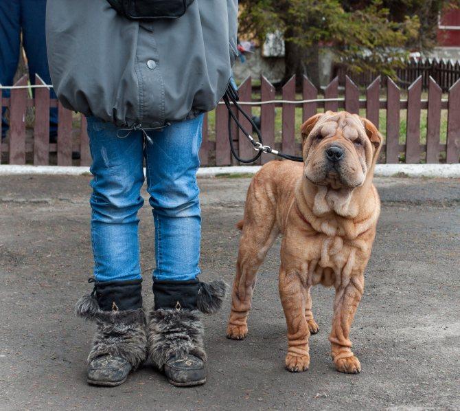 Сколько лет живут собаки. как определить возраст собаки. секреты долголетия