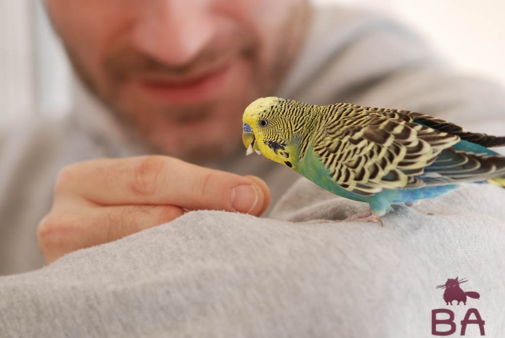 Как быстро научить попугая говорить
