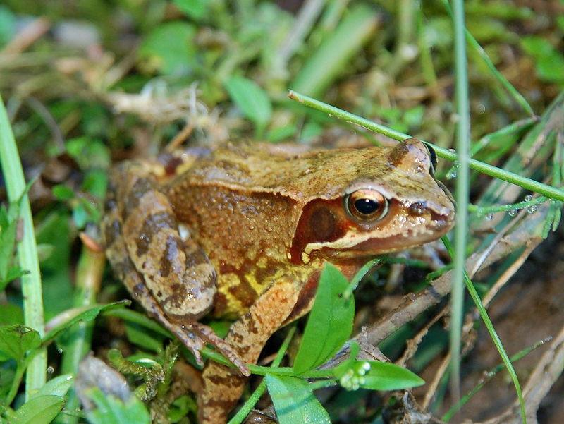 Виды лягушек. описание, особенности и названия видов лягушек | животный мир