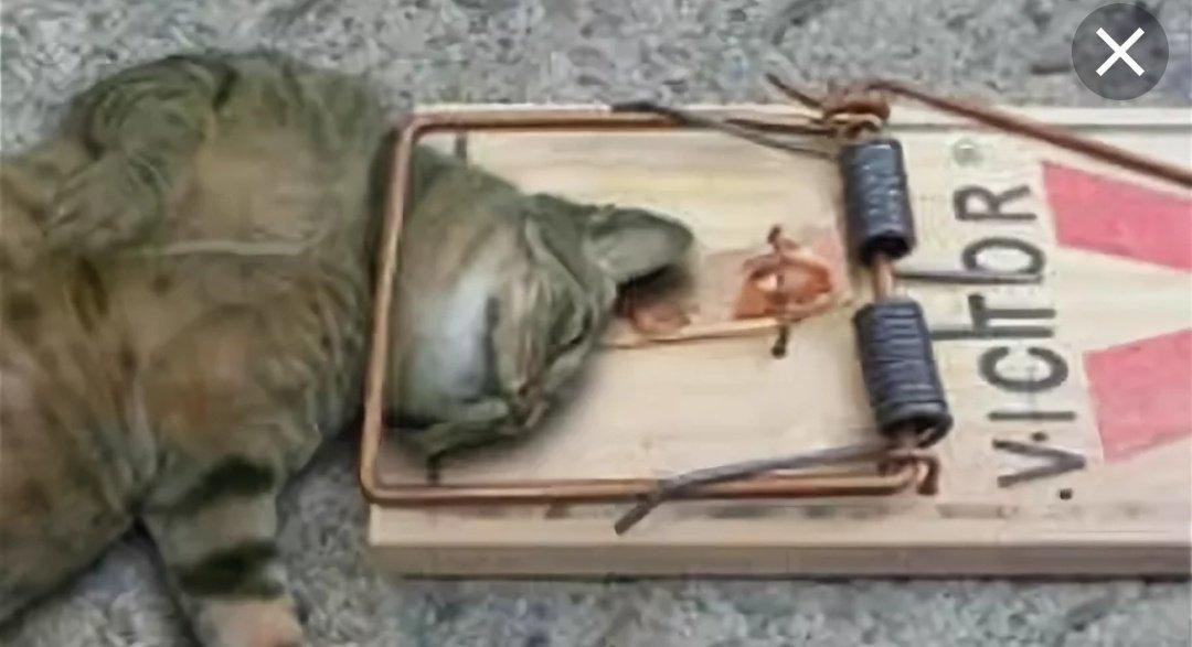 Как ловить кошек: 15 шагов (с иллюстрациями) - wikihow