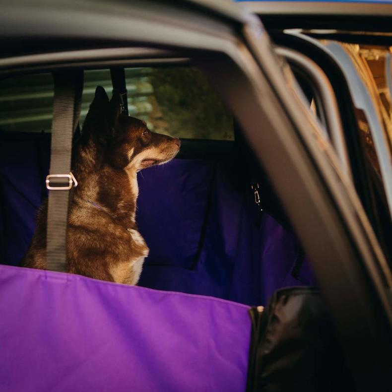 Автогамак или как перевозить собаку в машине? - подводный мир