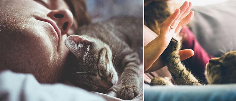 ???? чем полезны коты для людей и дома. энергетические защитники и доктора.