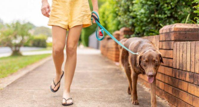 Как часто и сколько гулять с собакой
