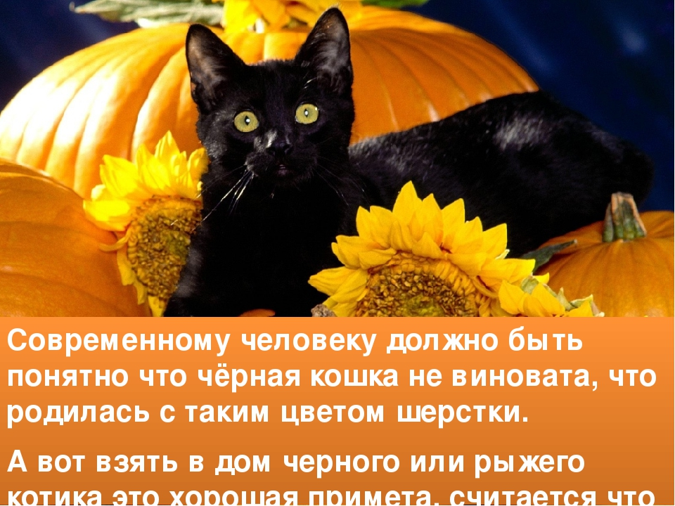 Рыжий кот или кошка в доме - все приметы и суеверия