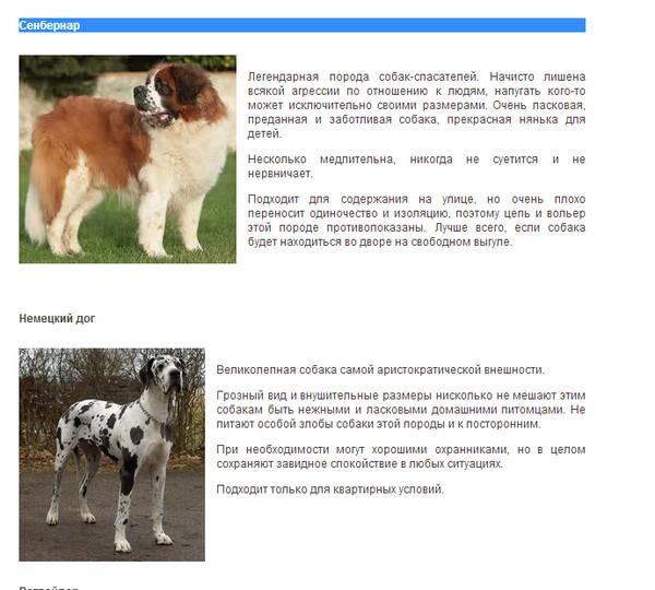 Как определить, к какой породе относится собака