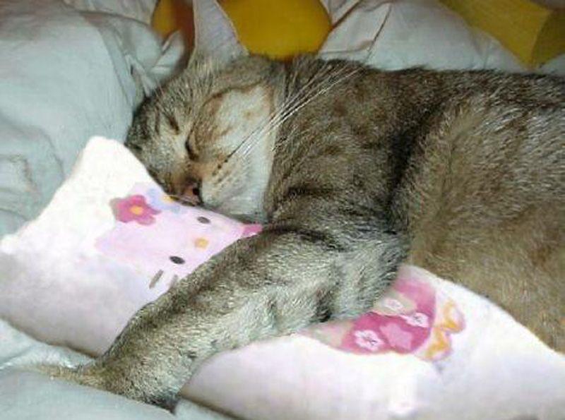 Зачем кошка будит хозяина по ночам