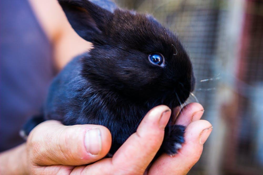 Породы кроликов: обзор и описание самых известных видов