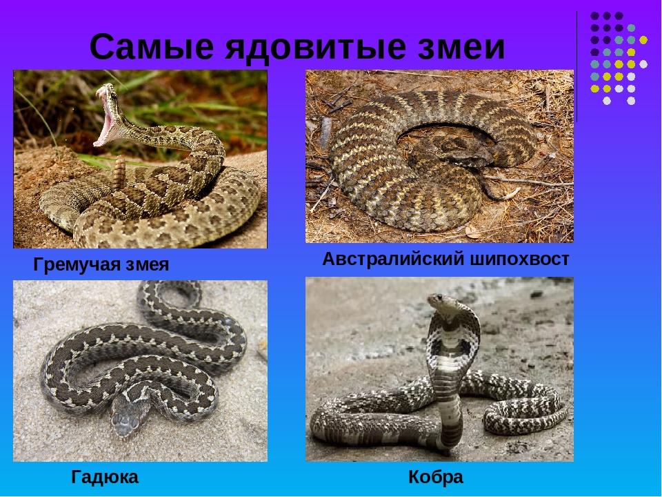 Самые ядовитые змеи на планете: список опасных змей   интересный сайт