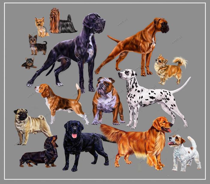 Количество пород собак в мире: признанные и непризнанные, классификация