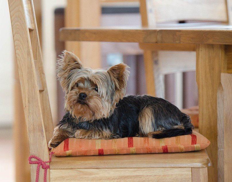 Я б собаку завел, да гулять неохота: топ-10 пород собак для ленивых | мур тв