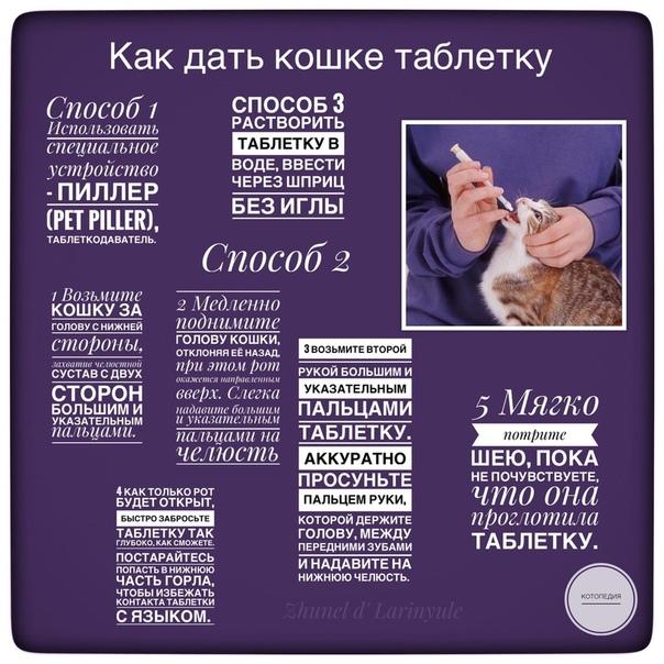 Как дать таблетку кошке: топ-5 лучших способов, как правильно давать кошке лекарство или таблетку
