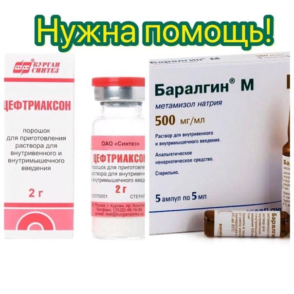 «неозидин»: как использовать противопаразитарный препарат для собак