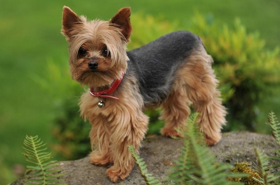 Топ-20 гипоаллергенных собак: список пород, фото, описание