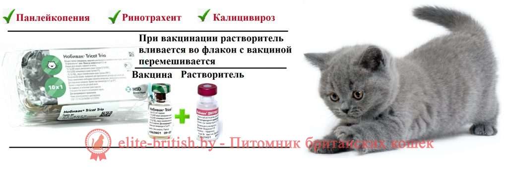 Вакцинация кошек: правила, цена и график проведения прививки для домашней кошки