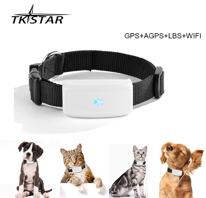 Выбираем gps трекер для собак и кошек