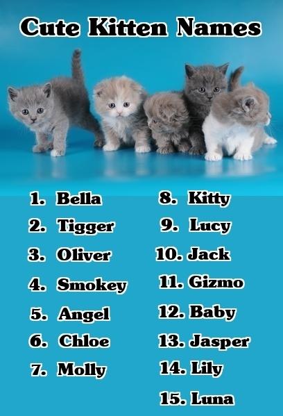 Имена для кошек и котов на английском языке