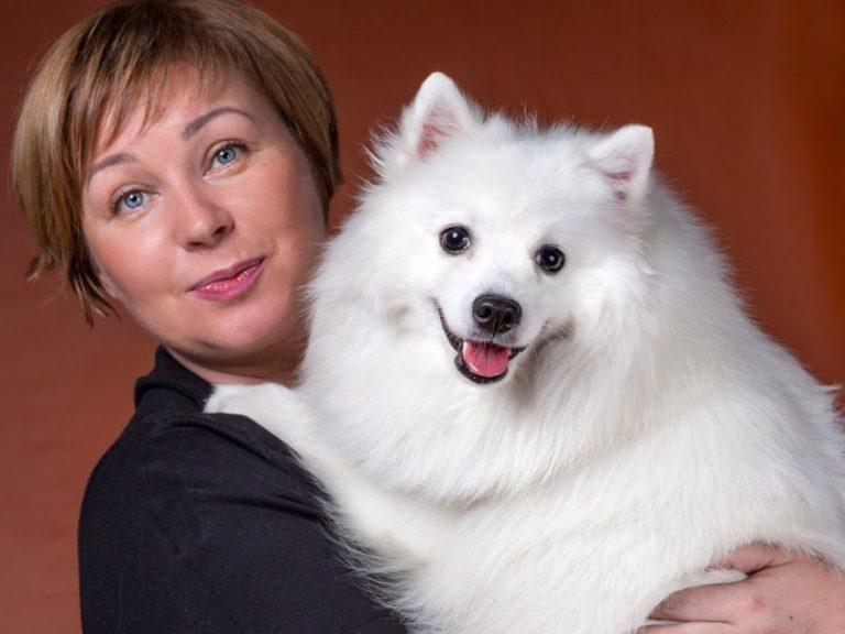 Порода собак американский эскимосский шпиц и его разновидности