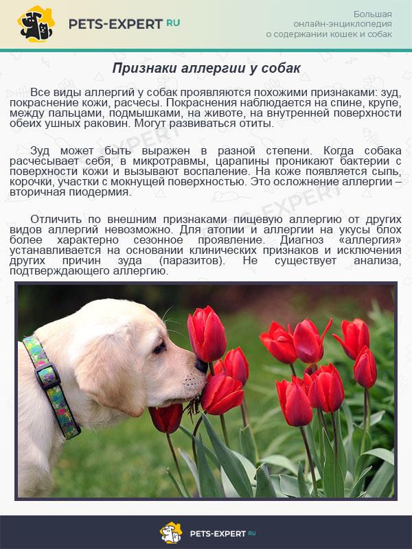 Ирландский сеттер собака. описание, особенности, уход и цена ирландского сеттера | sobakagav.ru