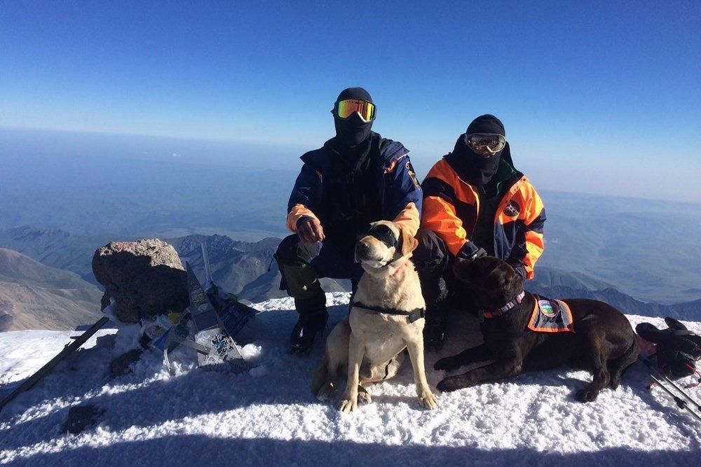 Собака-спасатель — список служебных пород для работы в снежных горах