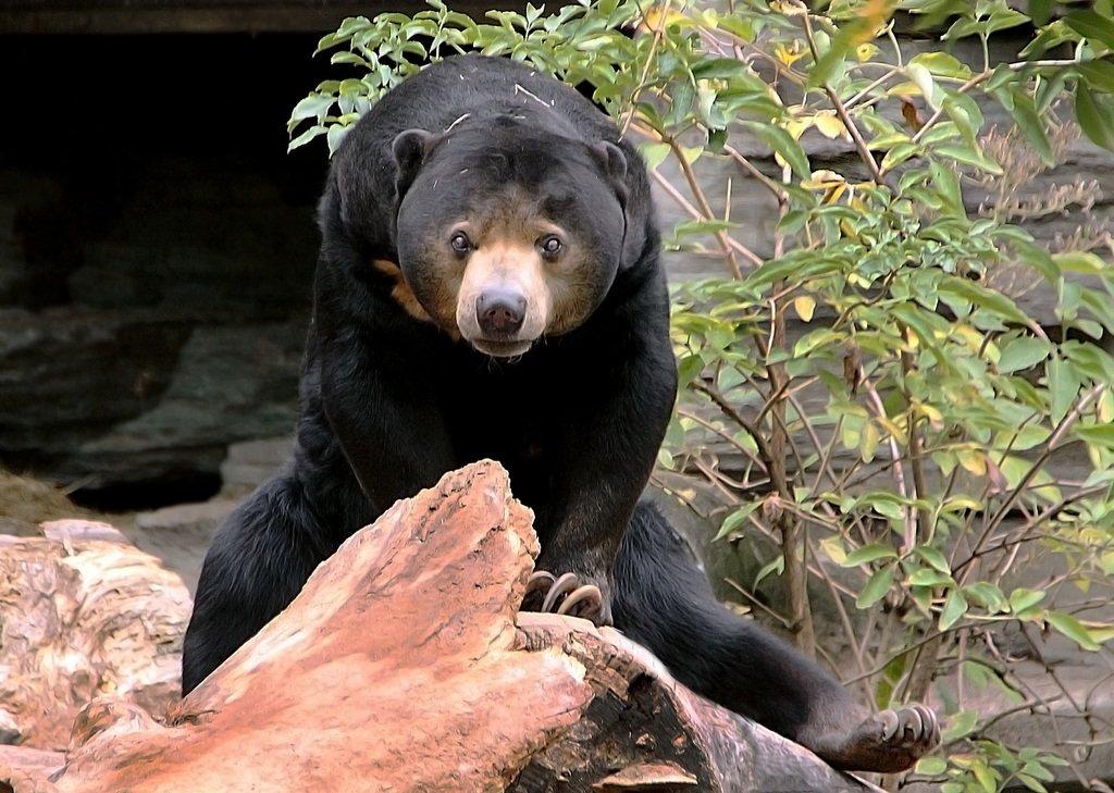Белый медведь: описание, где живут, чем питается, среда обитания