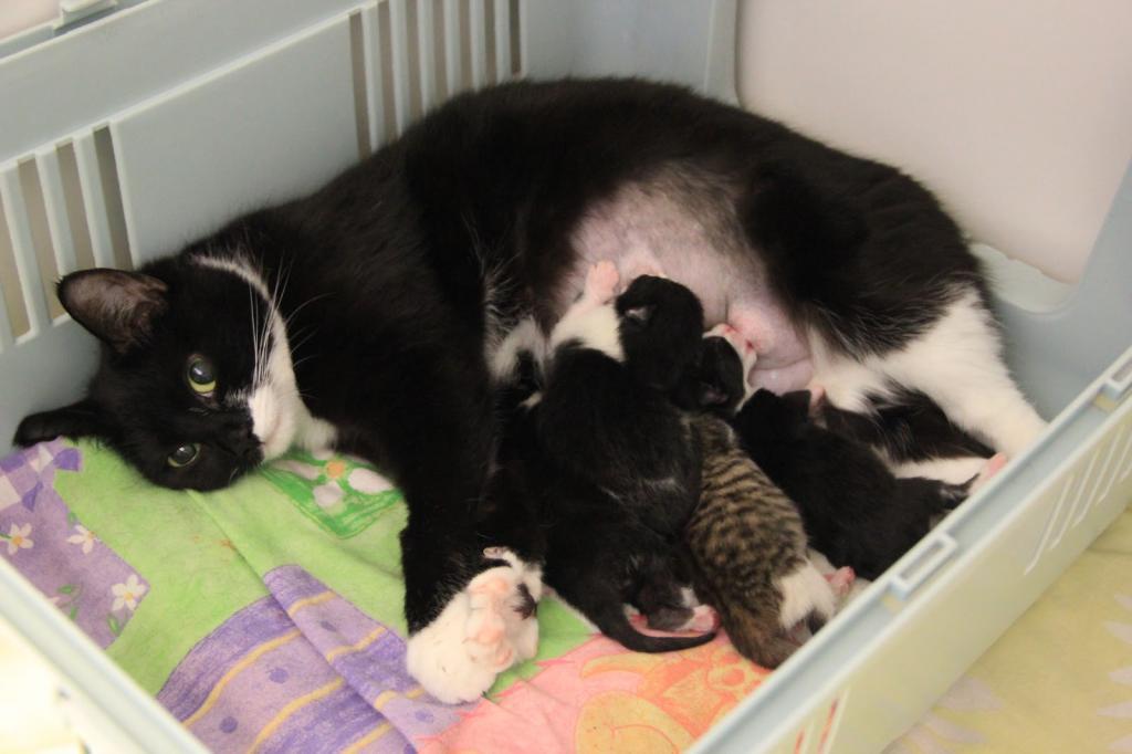 Сколько обычно котят рожают кошки: максимальное количество, а также впервые