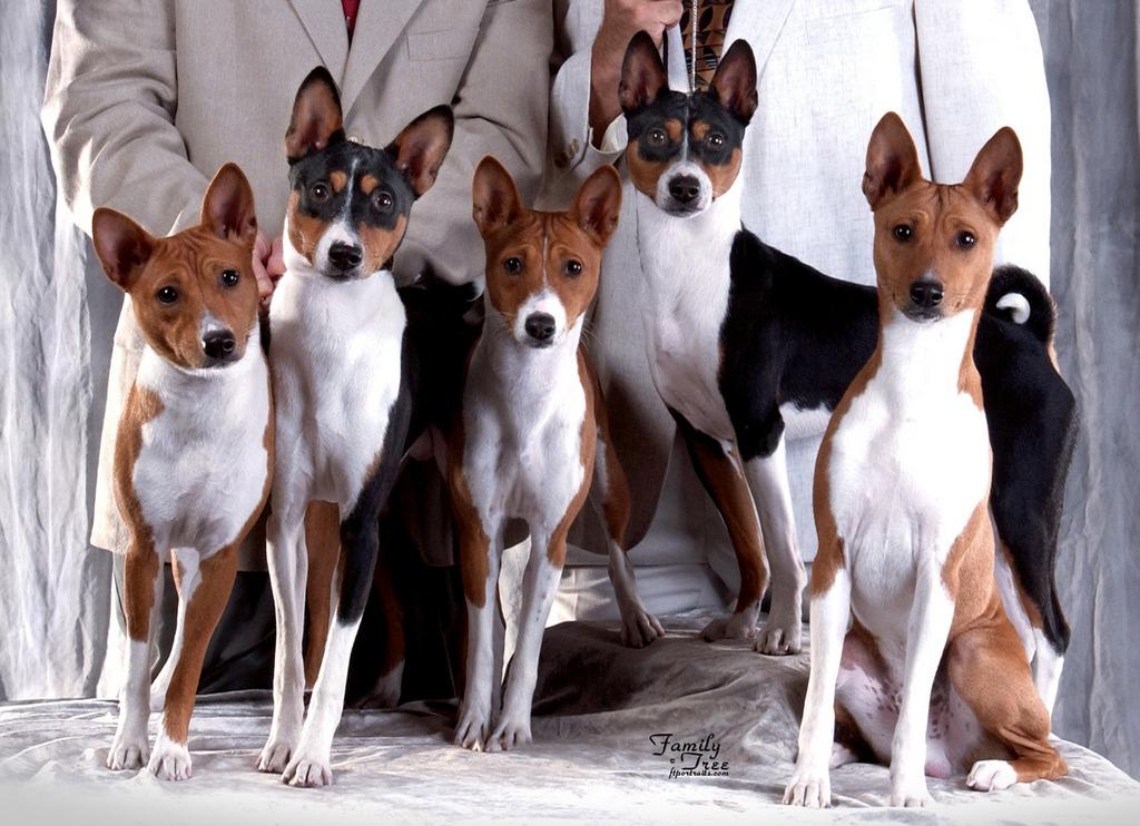 Разновидности той-терьеров: фото, названия пород, их характеристики, особенности и общие черты + какие окрасы бывают у этих собак