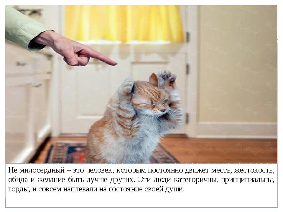 ᐉ как правильно наказывать кошку? - ➡ motildazoo.ru