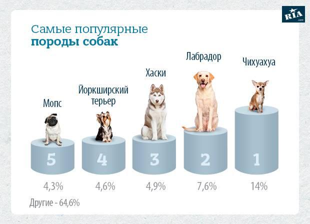 Опасные болезни собак и кошек