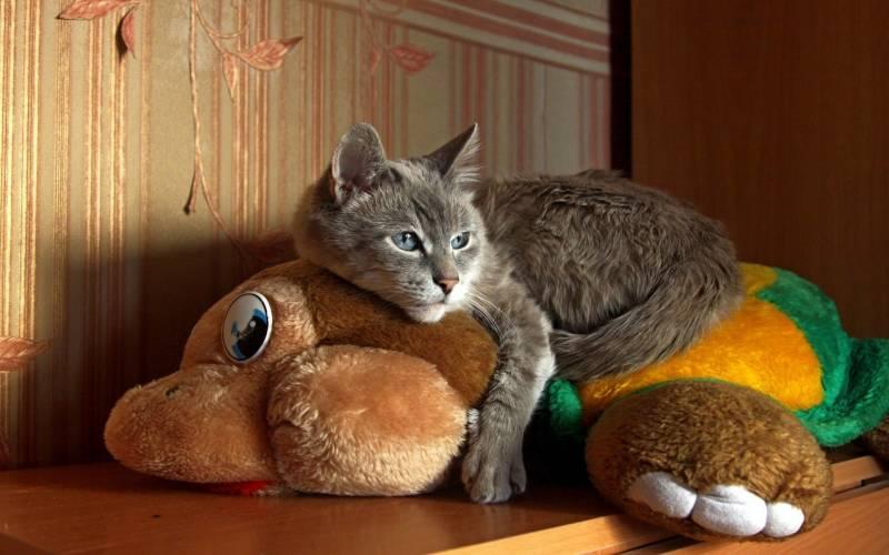 7 игрушек, которые должны быть у каждой кошки - gafki.ru