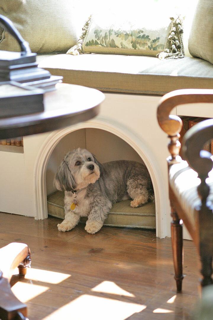 Породы собак для квартиры: спокойные, недорогие, умные, самые здоровые, охранные (фото с названиями) питомцы, которых лучше завести для содержания дома. топ